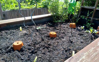 Gartentipps für trockene Sommer: Bewässerung mit Ollas