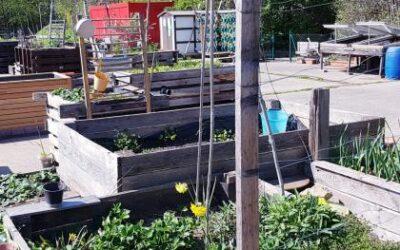 Berichte aus unserem Garten beim Betonacker